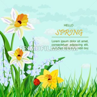 Narcissus flowers background Vector. Spring Holidays illustration - frimufilms.com