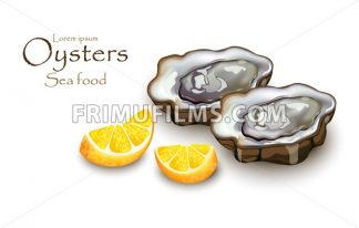 Oysters and lemon Vector realistic detailed 3d illustration - frimufilms.com