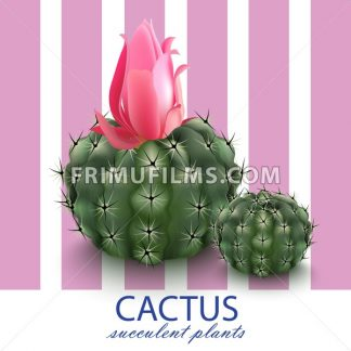 Pink cactus decor abstract background Vector illustration - frimufilms.com