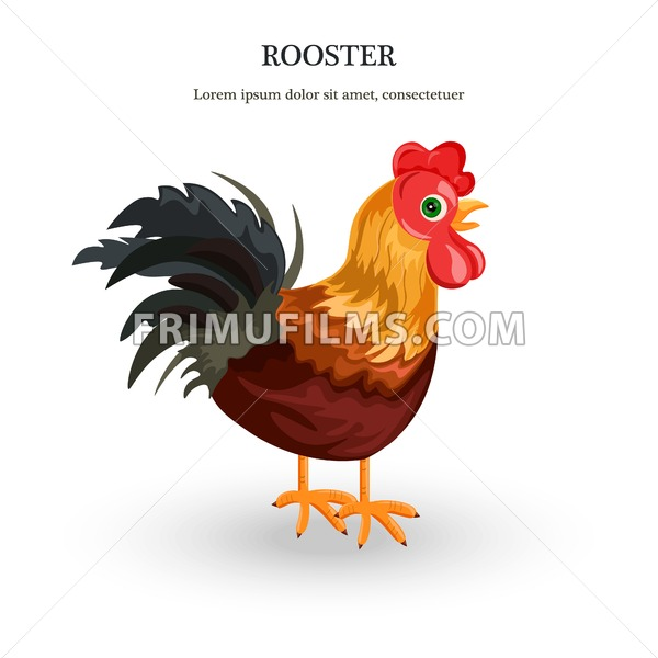 Rooster Vector detailed illustration. colorful cartoon character - frimufilms.com