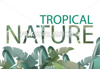 Tropical leaves vector card. Summer template design with palm nature - frimufilms.com