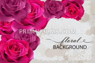 Vector floral background card with Fuchsia roses. 3d realistic flower design - frimufilms.com