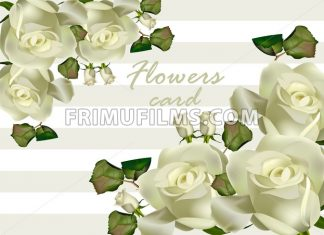 White roses flowers card Vector realistic. Beautiful floral background - frimufilms.com