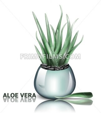 Aloe vera plant Vector. 3d detailed illustration design - frimufilms.com