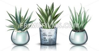 Aloe vera plants set collection Vector. detailed illustration design - frimufilms.com