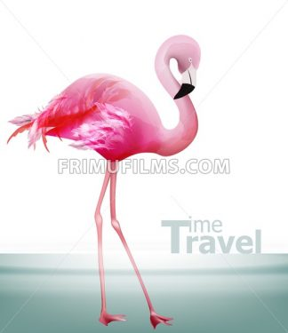 Flamingo card Vector. Beautiful pink bird on blue background - frimufilms.com
