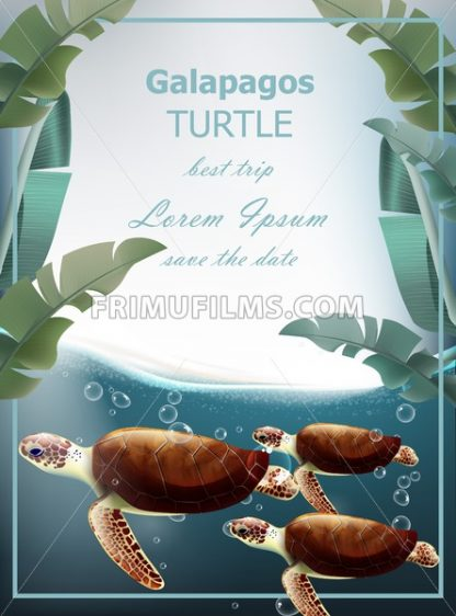 Galapagos turtles Vector. Summer sea card with cute turtles. under sea wild life - frimufilms.com