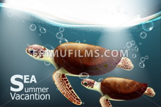 Galapagos turtles Vector. Summer undersea exotic card with cute turtles - frimufilms.com