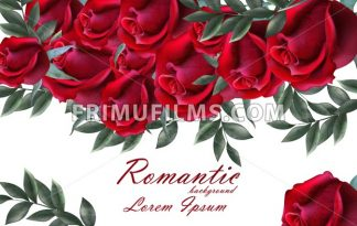 Romantic roses card Vector. Beautiful red roses flowers banner decor. Elegant decor vintage background - frimufilms.com
