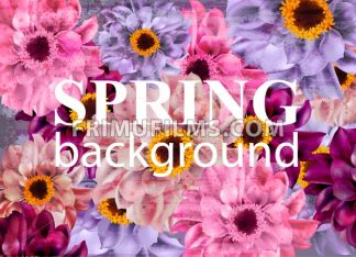 Vintage Spring background with colorful daisy flowers. Vector illustration - frimufilms.com