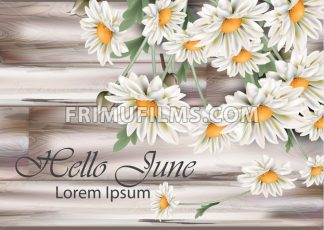 Vintage chamomile bouquet Vector. Spring floral decor on old grunge background - frimufilms.com
