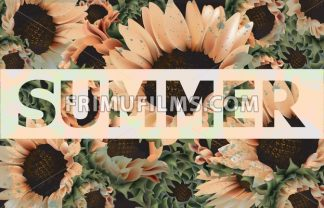 Vintage sunflowers background Vector. Beautiful spring summer card old painted style. 3d detailed illustration - frimufilms.com