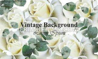 Vintage white roses background Vector. Retro floral design - frimufilms.com