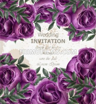 Wedding Invitation roses card Vector. Beautiful violet roses flowers decor. Elegant decor vintage background - frimufilms.com