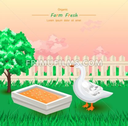 Goose eating Organic fresh food in the farm Vector illustration - frimufilms.com