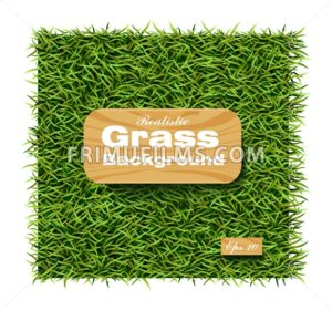 Grass background Vector realistic. Layout template illustration - frimufilms.com