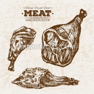 Hand drawn sketch wings and legs meat products set, farm fresh food, black and white vintage illustration - frimufilms.com