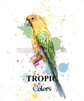 Tropical paradise parrot bird watercolor Vector. Paint splash colorful background - frimufilms.com