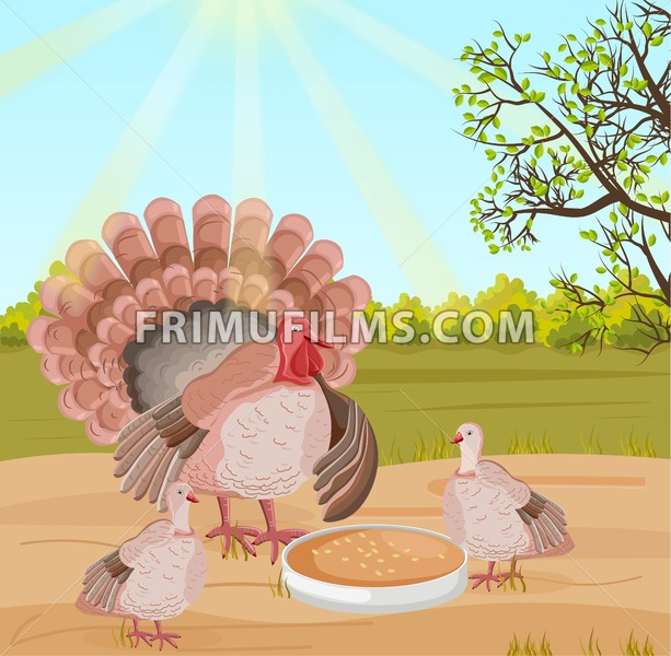 Turkey at the farm Vector. Nature background illustration - frimufilms.com