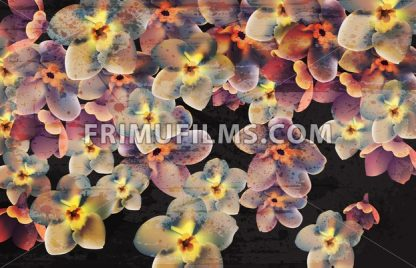 Vintage flowers on dark background Vector. Wallpaper floral decor beauty spring summer flowers collection - frimufilms.com