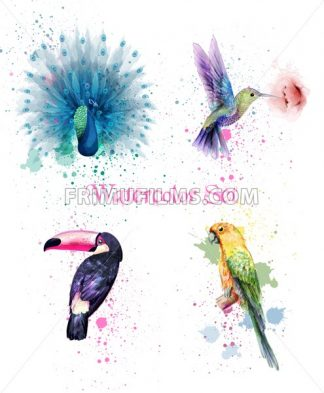 Watercolor birds set Vector. Peacock, parrot, humming bird illustration - frimufilms.com