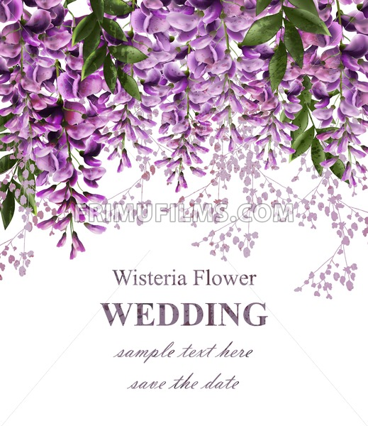 Wedding invitation card with wisteria flowers Vector. Beautiful flower decor. Gorgeous nature beauty design - frimufilms.com