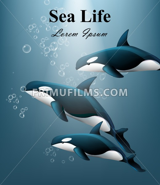 Whales under water Vector. Sea life beautiful background illustration - frimufilms.com