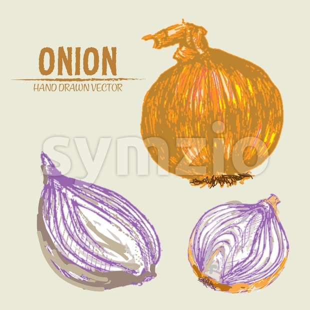 Digital vector color detailed onion hand drawn retro illustration collection set. Thin artistic linear pencil outline. Vintage ink flat style, Stock Vector
