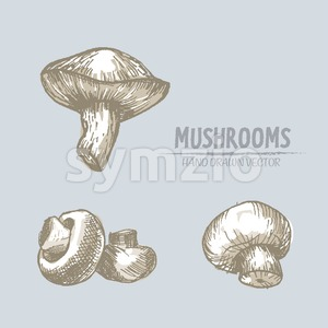 Digital vector color detailed mushrooms hand drawn retro illustration collection set. Thin artistic linear pencil outline. Vintage ink flat style, Stock Vector