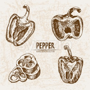 Digital vector detailed line art pepper vegetable hand drawn retro illustration collection set. Thin artistic pencil outline. Vintage ink flat style, Stock Vector