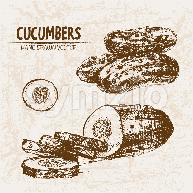 Digital vector detailed line art cucumber vegetable hand drawn retro illustration collection set. Thin artistic pencil outline. Vintage ink flat Stock Vector