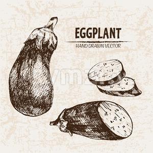 Digital vector detailed line art eggplant vegetable hand drawn retro illustration collection set. Thin artistic pencil outline. Vintage ink flat Stock Vector
