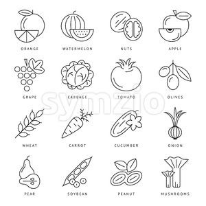 Digital black vegetable icons set infographics drawn simple line art, onion squash pear orange apple grape carrot wallnut peas watermelon cabage, Stock Vector