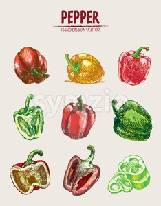 Digital vector detailed line art color pepper vegetable hand drawn retro illustration collection set. Thin artistic pencil outline. Vintage ink flat Stock Vector