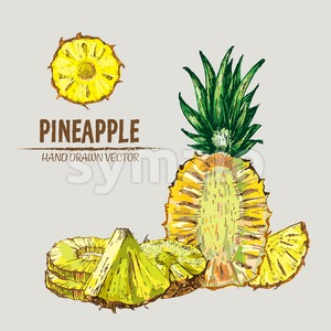 Digital vector detailed line art color pineapple fruit hand drawn retro illustration collection set. Thin artistic pencil outline. Vintage ink flat Stock Vector