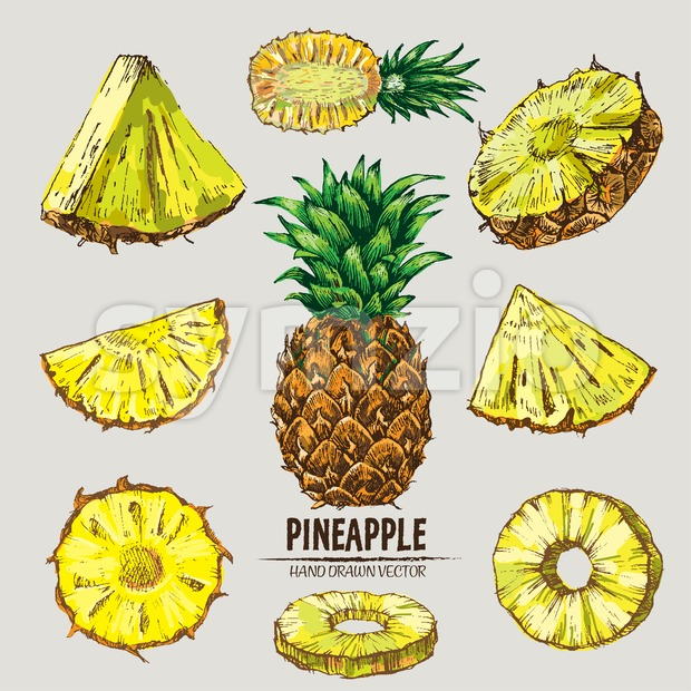Digital vector detailed line art color pineapple fruit hand drawn retro illustration collection set. Thin artistic pencil outline. Vintage ink ...