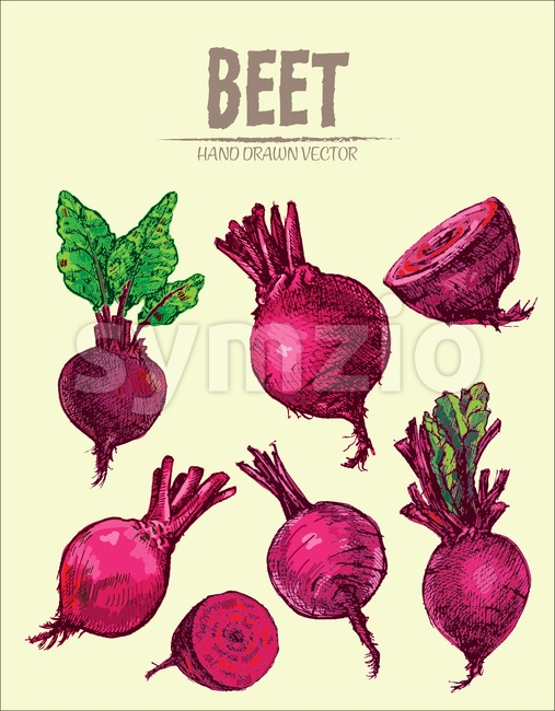 Digital vector detailed line art color beet vegetable hand drawn retro illustration collection set. Thin artistic pencil outline. Vintage ink flat Stock Vector