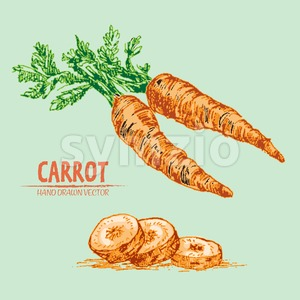Digital vector detailed line art color carrot vegetable hand drawn retro illustration collection set. Thin artistic pencil outline. Vintage ink flat Stock Vector