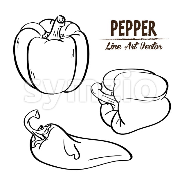 Digital vector detailed line art black and white pepper vegetable hand drawn retro illustration collection set. Thin artistic pencil outline. Vintage Stock Vector