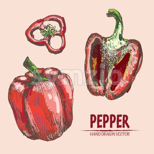 Digital vector detailed line art color pepper vegetable hand drawn retro illustration collection set. Thin artistic pencil outline. Vintage ink flat Stock Vector