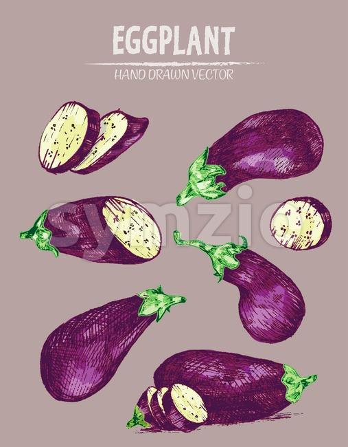 Digital vector detailed line art color eggplant vegetable hand drawn retro illustration collection set. Thin artistic pencil outline. Vintage ink flat Stock Vector