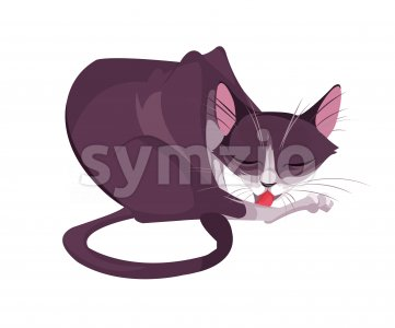 Digital vector funny comic cartoon big pink cat with tail licking its paw leg, hand drawn illustration, abstract realistic flat style Stock Vector