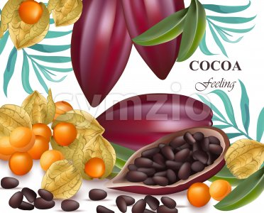 Cocoa beans and gooseberry realistic detailed Vector exotica Stock Vector