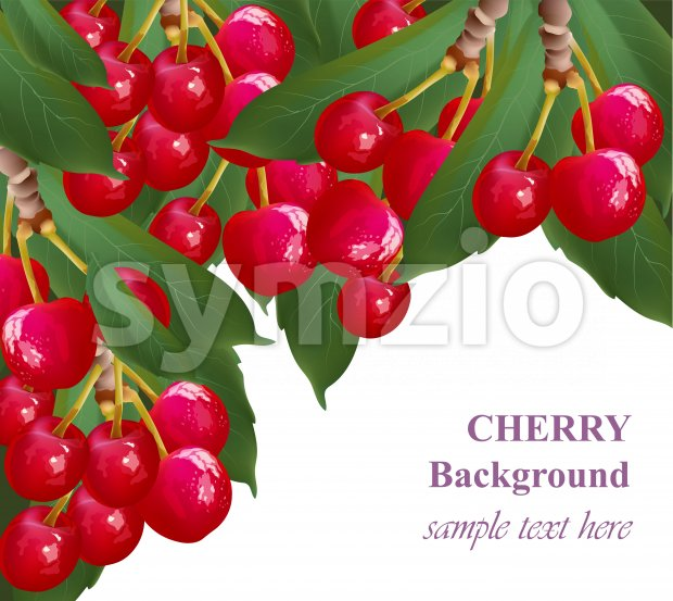 Cherry fruits background growing branches Vectors illustration