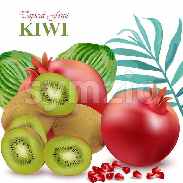 Exotic fruits avocado, papaya, kiwi, pomegranate palm leaves Vector illustrations Stock Vector