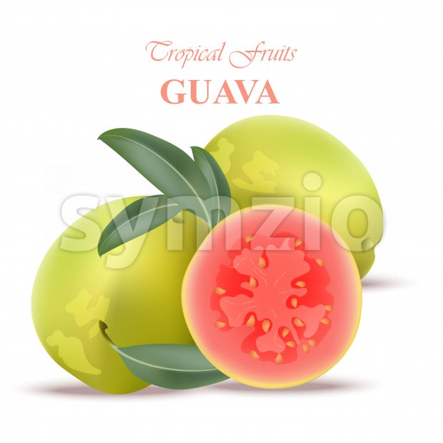 Guava fruit realistic Vector isolated on white backgrounds