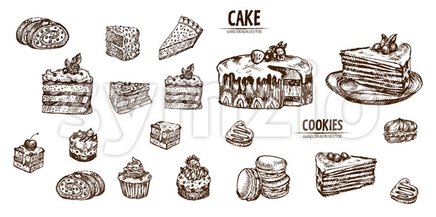 Digital vector detailed line art sliced cake and cupcakes hand drawn retro illustration collection set. Thin artistic pencil outline. Vintage ...