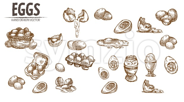 Digital vector detailed line art eggs in wooden basket hand drawn retro illustration collection set. Thin artistic pencil outline. Vintage ink flat, Stock Vector