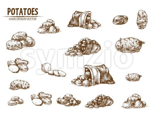 Digital vector detailed line art potato vegetable hand drawn retro illustration collection set. Thin artistic pencil outline. Vintage ink flat, Stock Vector