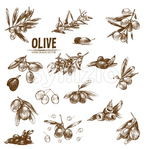 Digital vector detailed line art olive and oil hand drawn retro illustration collection set, stove oven. Thin artistic pencil outline. Vintage ink Stock Vector